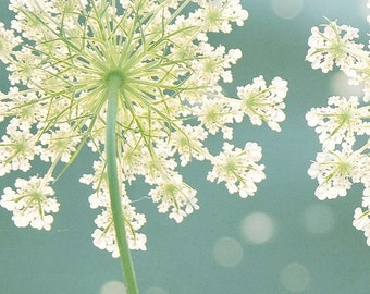 Queen Anne's Lace Photo, Summer Meadow Print, Teal Artwork, Macro Flower Print, Botanical Photo