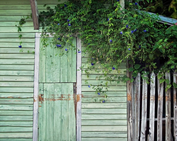 Rustic Print, Fixer Upper Decor, Weathered Wood Door Photograph, Door with Flowers Photo, Home Decor Photography, Doorway Ptint