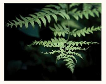 Nature Photography, Art, Photography, Forest, Ferns, Deep Greens, Fine Art Print