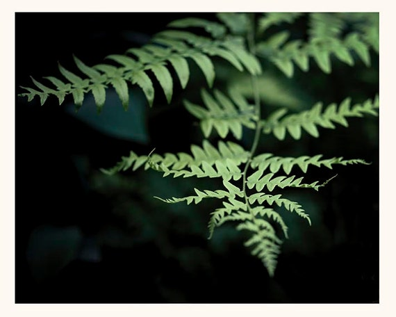 Nature Photography, Art, Photography, Forest, Ferns, Deep Greens, Fine Art Print