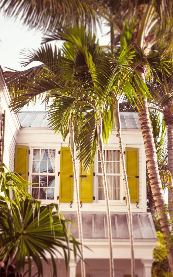 Art, Photography, Beach Cottage Photography, Wall Art, Print, Cottage Decor,Travel Photo, Palm Tree Print