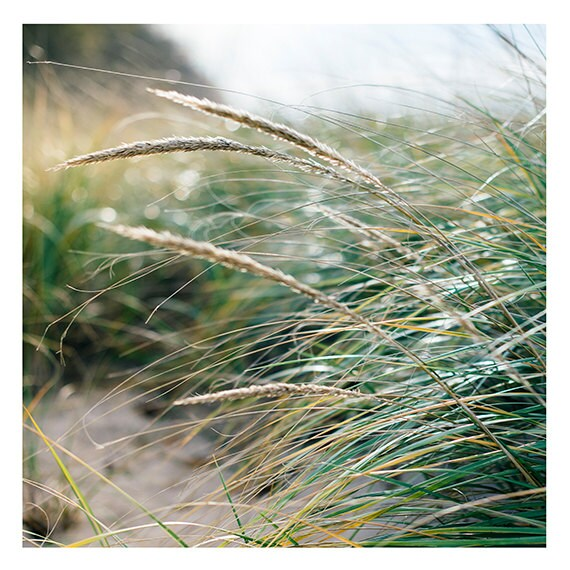 Beach Photo, Coastal Print, Beach Grasses Photo, Modern Beach Home Wall Decor, Coastal Home Print