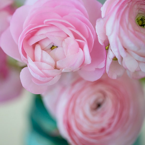 Nature Photography- Fine Art Photography- Valentines Day- Peonies- Fine Art Print-Pink Peonies