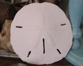 Extra Large Sand Dollar Shells Keyhole Coastal Beach Decorating Decor DIY Crafts Ornaments Weddings Art Projects XL Big Size Mermaid Money