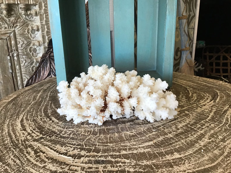 Vintage White Brownstem Lace Coral Cluster Clump Coastal Style Table Accent Beach Home Office Living Decor Display Fossil Marine Nautical