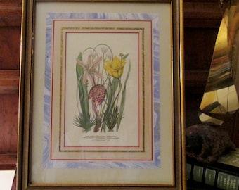 Vintage Pair of Ethan Allen Botanical Prints, Pair Framed Tulip and Iris Botanical Prints, Matted and Framed Floral Prints