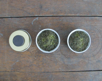 Felted wool magnets, star moss in upcycled lids, set of 5, handmade green felt refridgerator magnets, natural eco friendly fridge magnets