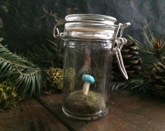 Amanita mushroom terrarium, Bright Turquoise, a felted wool garden in glass jar, glass terrarium, felt moss terrarium, mushroom hunter gift