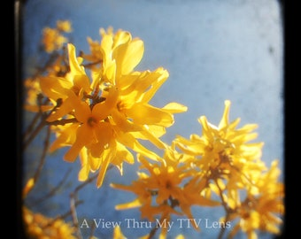 PHOTOGRAPHY DOWNLOAD of Yellow flowers- TTV Photography