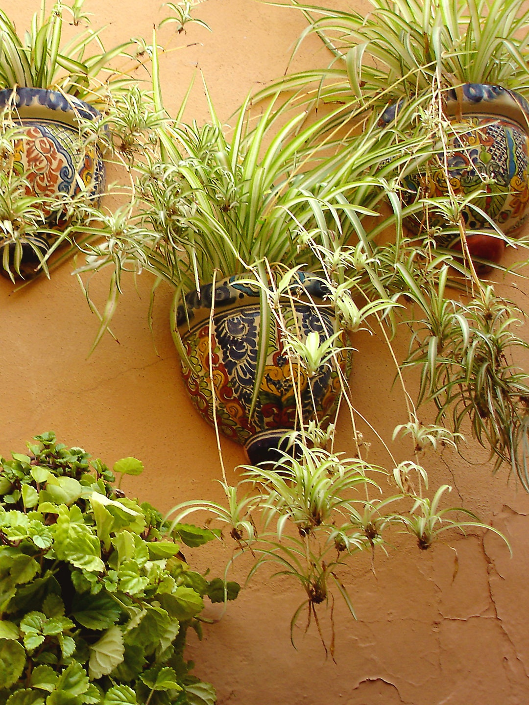 San Miguel Mexico Garden Wall Planters 5 X 7 Photographic