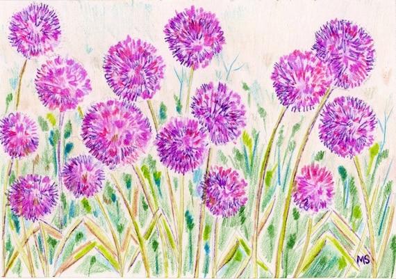 Allium Garden Flower Art Print Colored Pencil Ink Drawing | Etsy