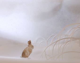 It's a mystery in the sifting snow, where the rabbit goes.