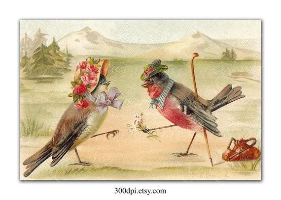 Indien amour oiseaux datant site