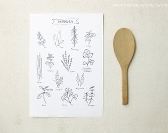 Herbs Kitchen Art - 8x11 Ink Illustration / Culinary Art Print - Kitchen Decor