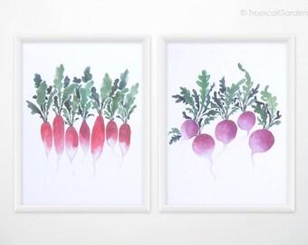 Radish Art Set of 2 - Watercolor food painting, vegetable print - 8x10 OR 8x11 Kitchen Art / Botanical Home Decor
