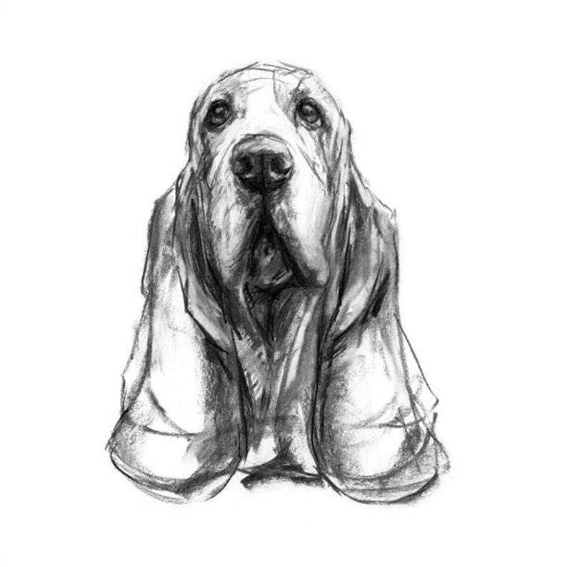 hond tekening afdrukken basset hound tekening fine art hond | etsy