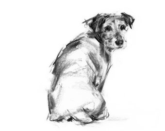Jack Russell Terrier dog sketch  - Collectable art print - gift terrier lover