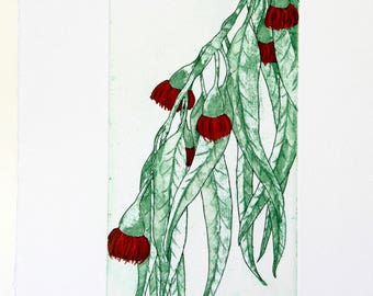 Eucalyptus - Original Etching