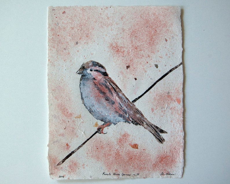 Female House Sparrow No. 37: Pulp Painting on Handmade Paper image 0