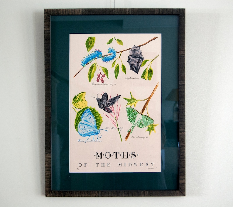 Moths of the Midwest framed and matted  19 color Letterpress image 0