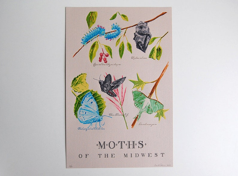 Moths of the Midwest  19 color Letterpress  with Cecropia image 0