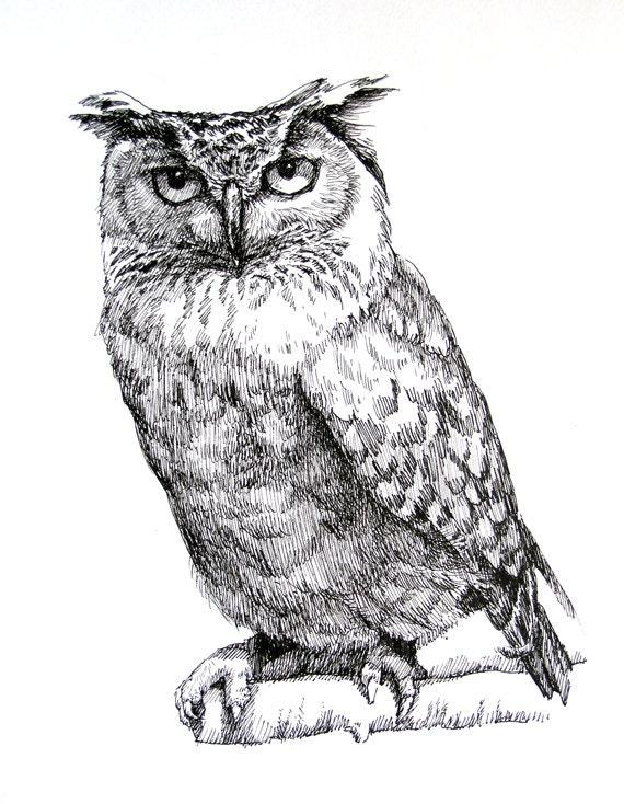 Ястребиная сова рисунок карандашом