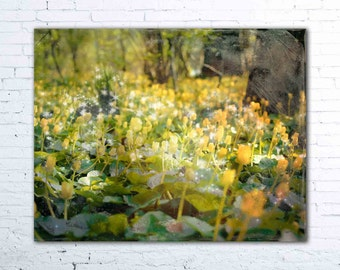 yellow flower photography - woodland wall art - enchanted forest print