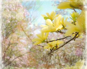 yellow magnolia print - pastel floral nursery decor - flower photography - magnolia flower print