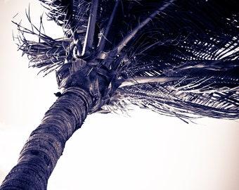Fine Art Print, Wall Art, Key West, Island, Tropical, Sunset, Photography, Beach, Palm Trees.