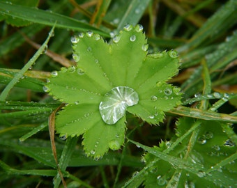 Wild Medicine November Lesson Digital Issue - Foraging, Herbalism, Hedgerow Healing