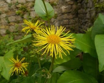 Wild Medicine October Lesson Hedgerow Herbalism Distance Course DIGITAL