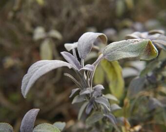Wild Medicine - January Digital Edition Herbal Medicine, Foraging, Eco Living