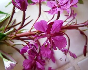 August Wild Medicine Hedgerow Herbalism Distance Course