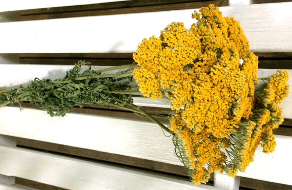 Dried flowers bunch yellowgold yarrow flowers natural etsy image 0 mightylinksfo
