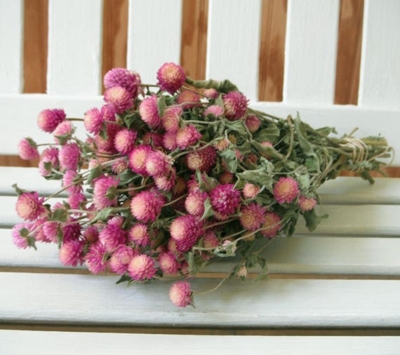 Dried flower bunch bi colored lovely rose pink color globe etsy image 0 mightylinksfo
