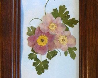 Pressed flowers-Japanese Anemones