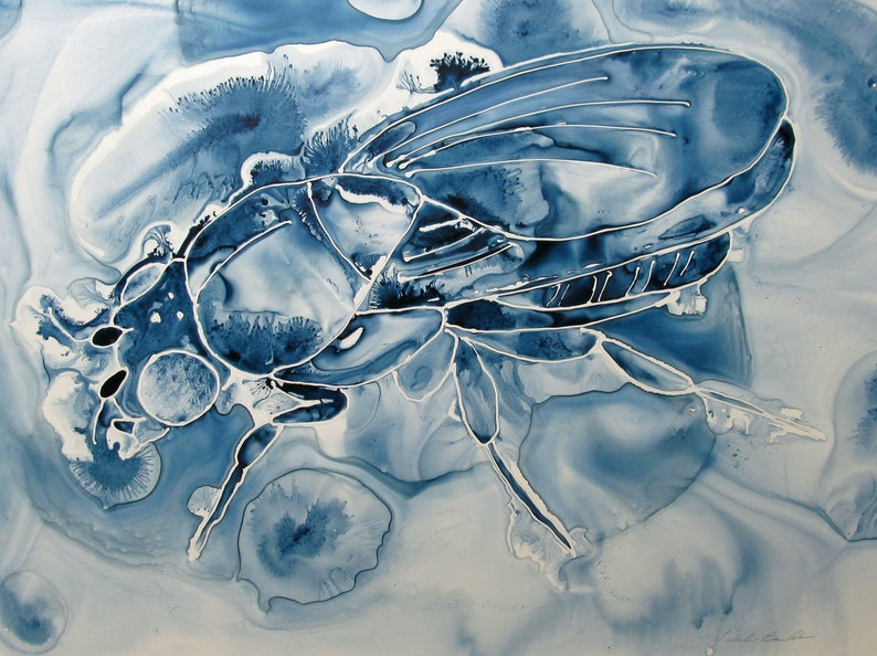 Big Blue Bug: Ink painting of Fruit Fly on Yupo  Drosophila image 0