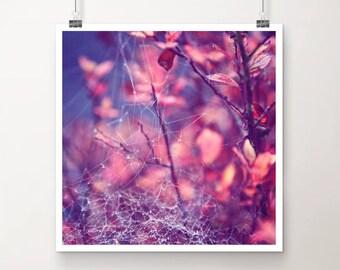 "KunstDruck ""StringTheory"" - Natur pink lila Spinnennetz Tau Tropfen vintage Foto Fotografie gefroren Winter Makro"