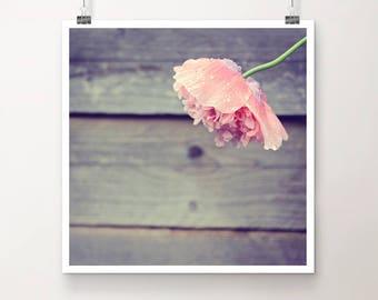 "KunstDruck ""RegenTanz"" - Natur Mohn Blume pink Regen Tropfen vintage Foto Fotografie"