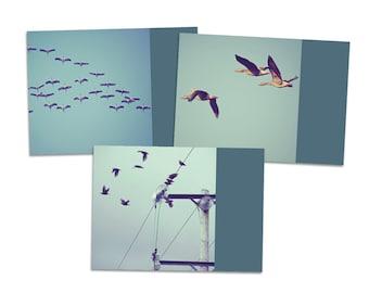 "3er Postkarten-Set ""FlugSchule"" - Postkarte Karte Fotografie Foto Vögel Vogel Gans Gänse Kranich Schwarm Zugvogel Fliegen Flug"