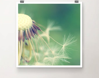 Ready for Take-Off - Fine Art Print Dandelion Macro Nature Summer Seed Flower green