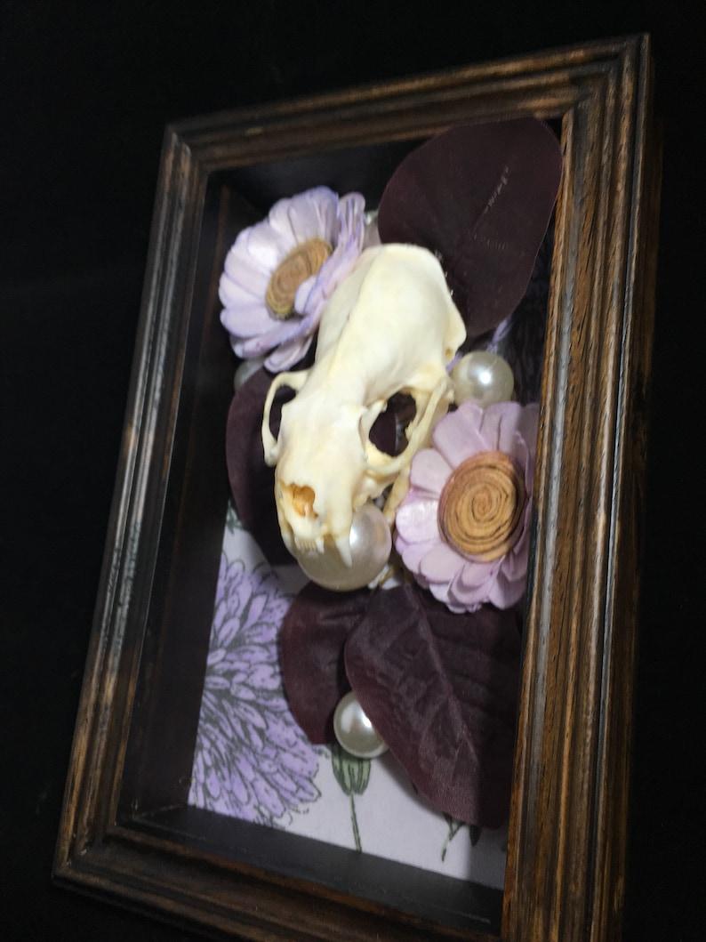 Real mink skull Lovely.