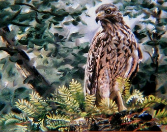 Red Shouldered Hawk 11 x 17 print (image 8.25 x 16.5)  by artist RUSTY RUST / H-38-P