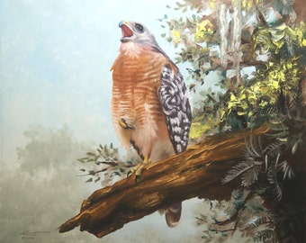 Red Shouldered Hawk 11 x 17 print (image 10.5 x 12.75)  by artist RUSTY RUST / H-58-P