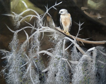 Red Shouldered Hawk 11 x 17 print (image 10.5 x 12.75)  by artist RUSTY RUST / H-71-P