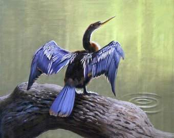 Anhinga wildlife bird 11 x 17 print (image 10.75 x 13)  by artist RUSTY RUST / A-94-P