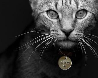 Anhänger für Katzen / Cat ID Tag
