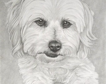 Pet portrait Custom Order Pencil portrait