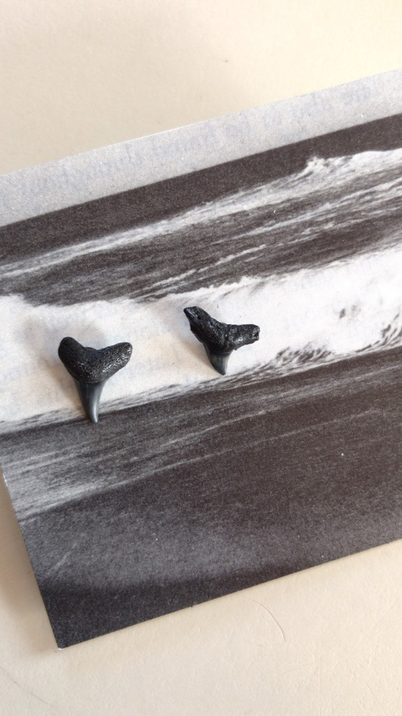 Wrightsville Beach Shark Tooth Earrings image 0