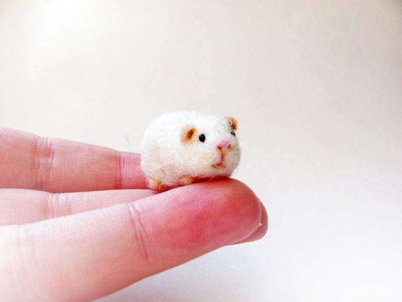 Miniature guinea pig image 0